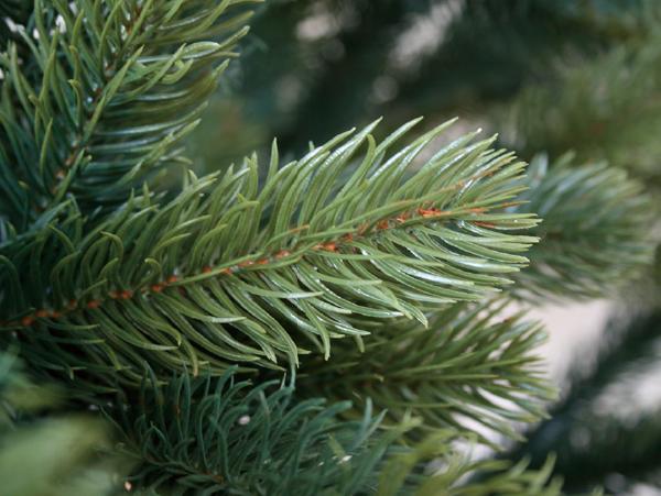 ドイツ_プラスティフロア社のクリスマスツリー_葉